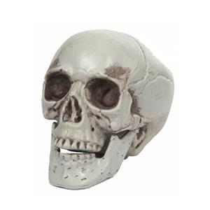 Crânio com Maxilar Amovível, 10 cm