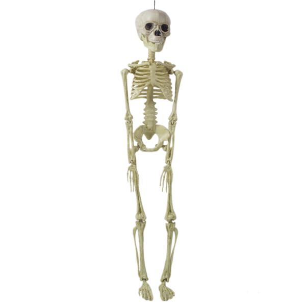 Esqueleto Articulado, 45 Cm