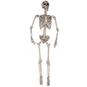 Esqueleto Articulado Decorativo, 165 cm