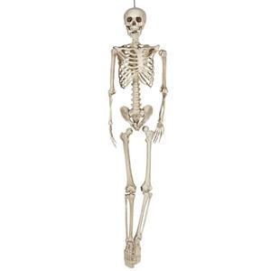 Esqueleto Articulado Decorativo, 160 cm