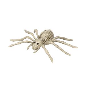 Esqueleto de Aranha, 24 x 12 cm