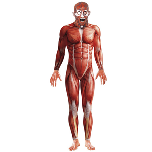 Fato Halloween Anatomia Corpo Humano com Máscara Deluxe, Adulto