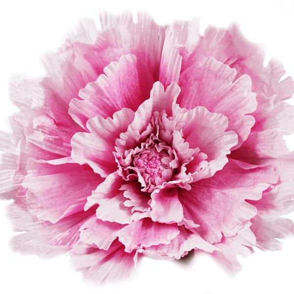 Flor Rosa Decoração