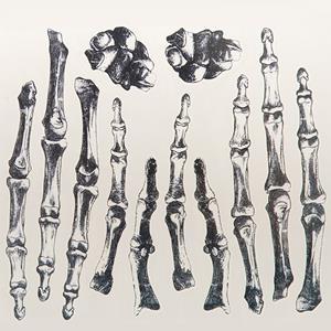 Tatuagens Temporárias Ossos Esqueleto