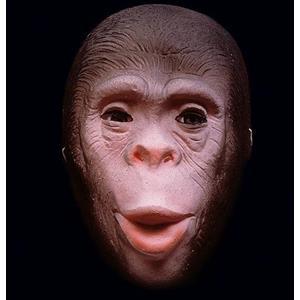 Máscara Chimpanzé em Latex