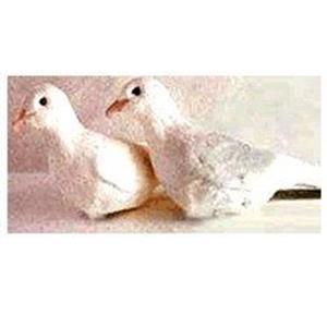 Rola de Borracha - Rubber Dove