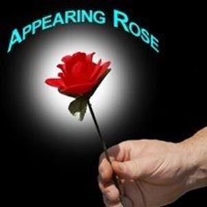 Rosa aparição - Appearing Rose