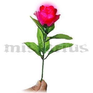 Rosa Luminosa